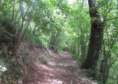 Naturweg Nähe Hexenhütte